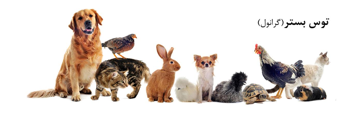 Animals11